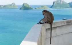 Ο πίθηκος κάθεται και εξετάζει ο κόλπος το AO Prachuap, ορόσημο Prachuap Στοκ Εικόνες