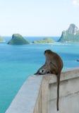Ο πίθηκος κάθεται και εξετάζει ο κόλπος το AO Prachuap, ορόσημο Prachuap Στοκ φωτογραφία με δικαίωμα ελεύθερης χρήσης