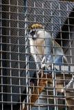 Ο πίθηκος κάθεται σε ένα κλουβί του ζωολογικού κήπου Στοκ Εικόνες