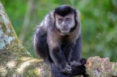 Ο πίθηκος και το δάσος Στοκ Φωτογραφίες