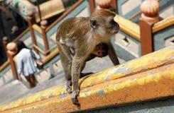 Ο πίθηκος μητέρων και μωρών αναρριχείται στα σκαλοπάτια στις σπηλιές Batu Στοκ Φωτογραφία