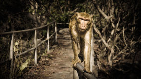 Ο πίθηκος περπατά στο φραγμό στοκ φωτογραφία