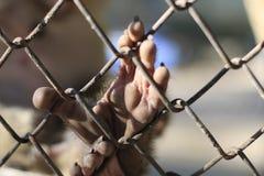 Ο πίθηκος που είναι κλειδωμένος στο κλουβί στοκ φωτογραφίες με δικαίωμα ελεύθερης χρήσης
