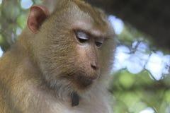 Ο πίθηκος που είναι κλειδωμένος στο κλουβί στοκ εικόνες με δικαίωμα ελεύθερης χρήσης