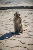 Ο πίθηκος στις οδούς τρώει τα τρόφιμα Στοκ Φωτογραφία