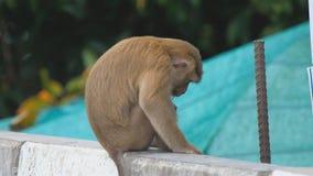Ο πίθηκος τρώει lollipop φιλμ μικρού μήκους