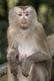 Ο πίθηκος Στοκ Φωτογραφίες