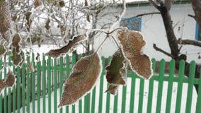 Ο παγετός κάλυψε τα ζωηρόχρωμα φύλλα μήλων μεγαλώνοντας υπαίθρια το χειμώνα κατά μια στενή πλάγια όψη εννοιολογική του καιρού και στοκ εικόνες με δικαίωμα ελεύθερης χρήσης