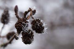 Ο παγετός κάνει τις πραγματικές ακίδες στοκ φωτογραφία με δικαίωμα ελεύθερης χρήσης