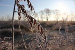 Ο παγετός στα φύλλα Στοκ εικόνες με δικαίωμα ελεύθερης χρήσης