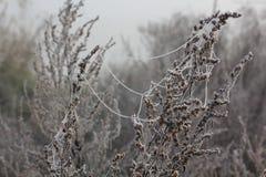 Ο παγετός στα φύλλα Στοκ Εικόνες