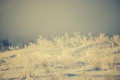 Ο παγετός Hoar που καλύπτει το γυμνό δέντρο διακλαδίζεται ηλιόλουστο χειμερινό ` s ημερησίως Στοκ φωτογραφίες με δικαίωμα ελεύθερης χρήσης