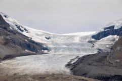 Ο παγετώνας Athabaska στο χώρο στάθμευσης Icefield σε όλοι αυτό είναι splendeur, Alb Στοκ Εικόνες