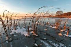Ο παγωμένος κάλαμος Στοκ φωτογραφία με δικαίωμα ελεύθερης χρήσης