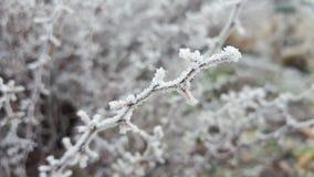 Ο παγωμένος μπαγαπόντικος κλαδίσκος Στοκ εικόνα με δικαίωμα ελεύθερης χρήσης