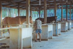 Ο παλαιός εκπαιδευτής φροντίζει το άλογό του μετά από να εκπαιδευθεί στο α Στοκ Φωτογραφίες