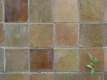 Ο παλαιός καφετής τοίχος κεραμιδιών και το μικροσκοπικό δέντρο στοκ εικόνα
