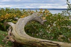 Ο παλαιός ξύλινος κορμός από τον ποταμό Στοκ Φωτογραφία