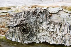 Ο παλαιός ραγισμένος φλοιός Στοκ Εικόνες
