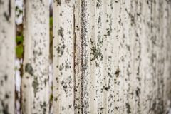 Ο παλαιός φράκτης καλύφθηκε με το βρύο Στοκ Εικόνες