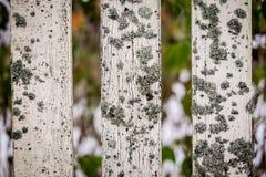 Ο παλαιός φράκτης καλύφθηκε με το βρύο Στοκ εικόνα με δικαίωμα ελεύθερης χρήσης