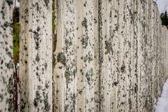 Ο παλαιός φράκτης καλύφθηκε με το βρύο στοκ φωτογραφίες με δικαίωμα ελεύθερης χρήσης