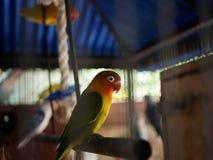 Ο παπαγάλος στοκ φωτογραφία με δικαίωμα ελεύθερης χρήσης