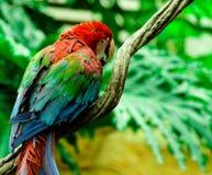 Ο παπαγάλος Στοκ εικόνες με δικαίωμα ελεύθερης χρήσης