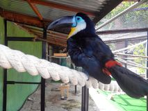 Ο παπαγάλος καθαρίζει τα φτερά Στοκ εικόνες με δικαίωμα ελεύθερης χρήσης