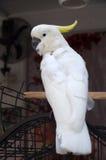 Ο παπαγάλος Στοκ Φωτογραφία