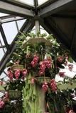 Ο παράδεισος Keukenhof λουλουδιών στις Κάτω Χώρες Στοκ φωτογραφία με δικαίωμα ελεύθερης χρήσης