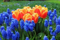 Ο παράδεισος Keukenhof λουλουδιών στις Κάτω Χώρες στοκ φωτογραφίες