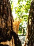 Ο παρασιτικός στο δέντρο Στοκ εικόνα με δικαίωμα ελεύθερης χρήσης