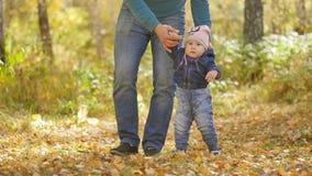 Ο πατέρας οδηγεί τα χέρια ενός μικρού παιδιού στο πάρκο φθινοπώρου o απόθεμα βίντεο