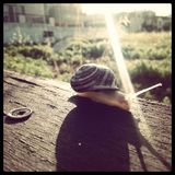 Ένας περίπατος πρωινού σαλιγκαριών Στοκ Φωτογραφίες