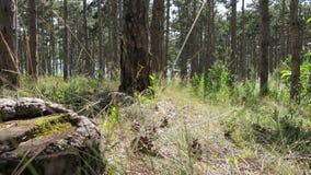 Ο περίπατος στο δάσος στη θερινή ημέρα φιλμ μικρού μήκους