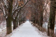Ο περισσότερο ευρωπαϊκά η αλέα το χειμώνα στοκ φωτογραφίες