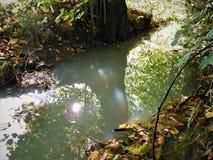 Ο ποταμός που μας παρουσιάζουν φύση ως καθρέφτη Στοκ Εικόνες