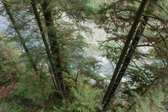 Ο ποταμός που τρέχει μέσω του πυκνού δάσους, πάρκο ποταμών Capilano, Π.Χ., μπορεί Στοκ Εικόνα