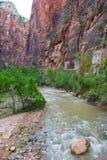 Ο ποταμός της Virgin κοντά στενεύει, εθνικό πάρκο Zion στοκ φωτογραφίες με δικαίωμα ελεύθερης χρήσης