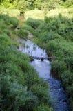 Ο ποταμός DÅ «kÅ ¡ TA ρέει στο περιφερειακό πάρκο Neris στη Λιθουανία Στοκ Εικόνες