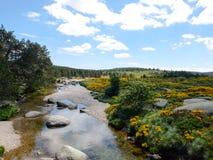 Ο ποταμός Tarn και δένει με τις ανθίζοντας σκούπες, Γαλλία Στοκ Φωτογραφίες