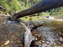 Ο ποταμός Thompson Στοκ Εικόνα