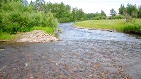 Ο ποταμός Ursul, ροές βουνών κάτω από τους λόφους στην κοιλάδα, στρίμωξε στις πετρώδεις τράπεζες που καλύφθηκαν με τα δάση απόθεμα βίντεο