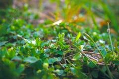 Ο πράσινος κύκλος αφήνει το υπόβαθρο συστάσεων επιφάνειας Στοκ εικόνα με δικαίωμα ελεύθερης χρήσης