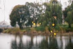 Ο πράσινος κύκλος αφήνει το υπόβαθρο συστάσεων επιφάνειας Στοκ φωτογραφία με δικαίωμα ελεύθερης χρήσης