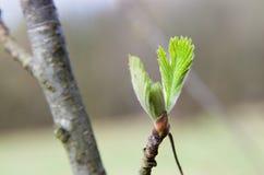 Ο πράσινος οφθαλμός Στοκ Φωτογραφίες
