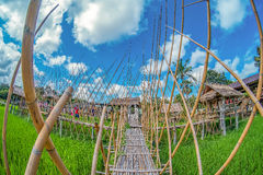 Ο πράσινος τομέας ρυζιού με το backgroundBamboo φύσης και μπλε ουρανού γεφυρώνει στον πράσινο τομέα ρυζιού με τη φύση και το υπόβ Στοκ Φωτογραφίες