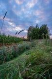 Ο πρόσφατα καλλιεργημένος οργανικός τομέας καλαμποκιού για τη βιομάζα στο νεφελώδες θερινό βράδυ με το ηλιοβασίλεμα χρωματίζει -  στοκ εικόνα με δικαίωμα ελεύθερης χρήσης