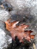 Ο πρώτος παγετός στον κήπο στοκ εικόνες με δικαίωμα ελεύθερης χρήσης